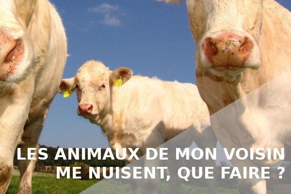 animaux voisins nuisibles