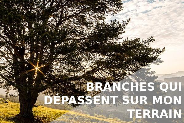 banches terrain