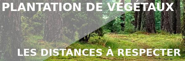 plantation végétaux distances