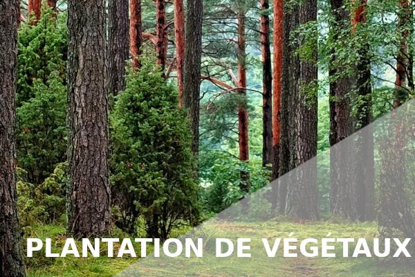 plantation végétaux